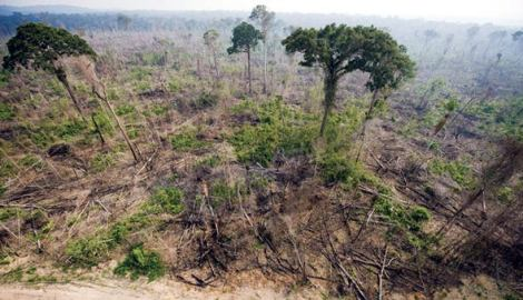 deforestation - what is so bad about it?